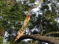 Atlanta tree service company
