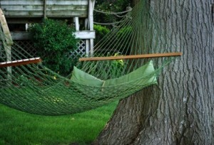 Sandy Springs tree services