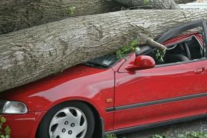 tree-hazard
