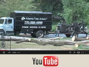 Tree removal by Atlanta Tree Arbors